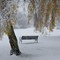 Lonely bench in the snow