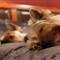 perritos durmiendo
