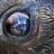 Buffalo Eyes