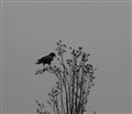 And the raven, never flitting, still is sitting, still is sitting