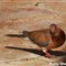 Pigeons_1980
