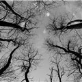 Trees to sky