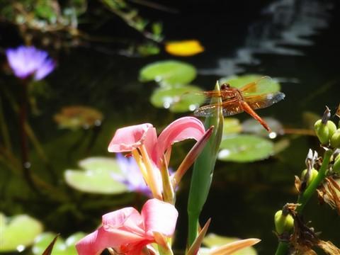 dragonfly 8-11 copy