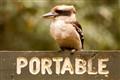 Portable Kookaburra