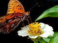butterfly_entry