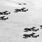 Venoms of 32 Squadron
