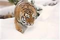 Zoo Granby_059