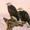 double eagles 2318