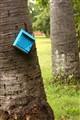 Dead Mailbox