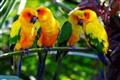 Whispering birds