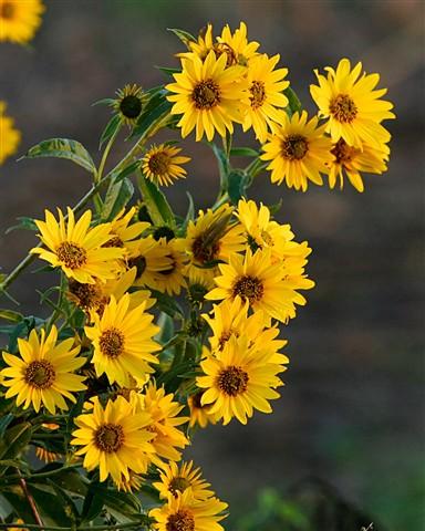 Wildflowers 2 x