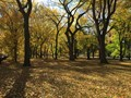 Empty autumn forest