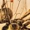 2017 Amber 029 March Diptera Brachycera Orthorrhapha Rhagionoidea Bolbomyiidae Male