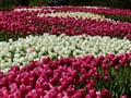 Holland color patterns