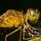 Dragonfly3 web