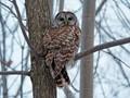 Chillin' Owl