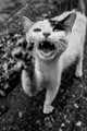Ailurophobia- Fear of Cats