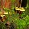 mushroom suburb 16x9