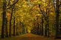Forest lane in Fall