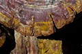 Detail of Petrified Tree Trunk