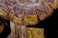 Detail of Petrified Tree Trunk