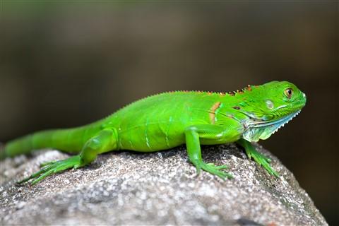 2012_Costa_Rica_096