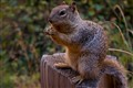 Squirrels in zio