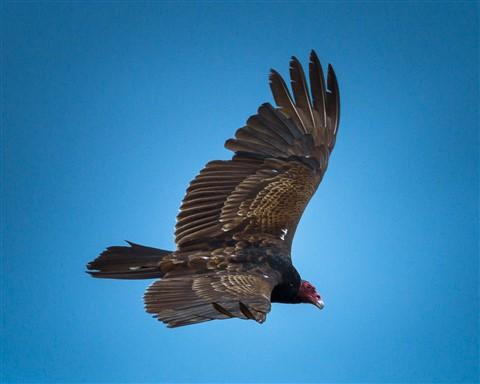VultureLR5Radial