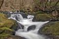 Golitha Falls