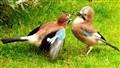 Avian TLC