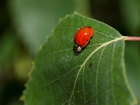 2012-05-17 Lady Bug 3