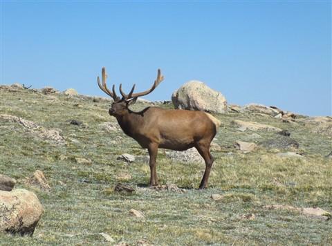 HS30EXR Velvet Bull