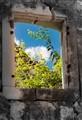 A window into life
