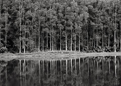 P8161165 Eucalytus Forest HK