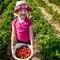 Strawberry Picking-8894
