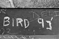 Bird Deli
