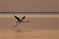 pink floyd takeoff