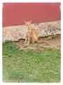 Cat Puerto Rico resident