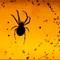 DSC_2374_Spider