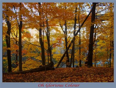 Oh glorious colour ZA219331