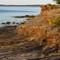 Acadia (99 of 148)