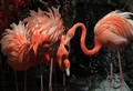 FlamingosAtWorldWildlifeZoo