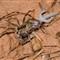 Spider_7344