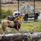 Wildlife Safari  OR.