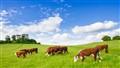 British grassland!