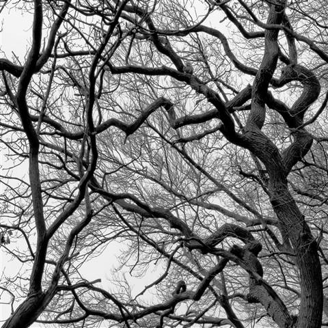 tree_bare