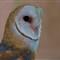 0346_Owl
