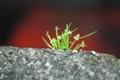 strayplant