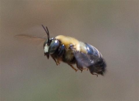 Mailbox Bee IMG_3220