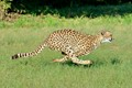 Ann van Dyk Cheetah Centre-2